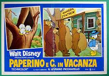 T29 FOTOBUSTA PAPERINO E C. IN VACANZA WALT DISNEY ANIMAZIONE CARTONE ANIMATO 3