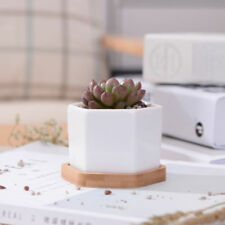 Ceramic Succulent Plant Pot/Cactus Pot With Bamboo Tray White Modern Design