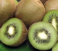 75 Fuzzy Kiwi Fruit Seeds Kiwifruit Actinidia deliciosa Vine Chinese Gooseberry