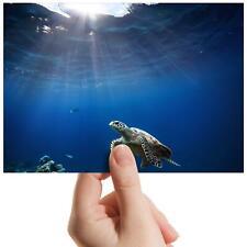 "Underwater Swimming Turtle - Small Photograph 6"" x 4"" Art Print Photo Gift #8209"