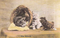 1900s illustrated cat post card titled ( the attack  )  stock from an old shop