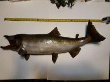 "Coho Salmon Fishing Taxidermy 36"" Man Cave"