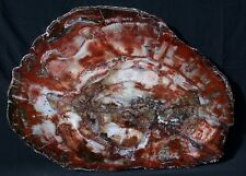 """SiS: GIANT Petrified Wood Table Top - GORGEOUS 33""""+ BOLD RED Slab!"""