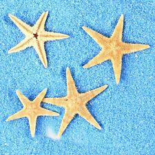 Natural Tiny Starfish Decoration Diy Crafts Nautical Decor Micro Landscape 20pcs