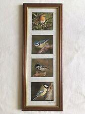 Robin / Blue Tit / Coal Tit / Great Tit Wildlife Classics Photos Framed Signed