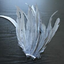 "25 pcs 12-14"" long Silver Grey Dyed Rooster COQUE tail Feathers for crafting"