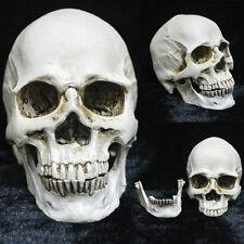 "Human Lifelike Skull Resin Model Anatomical Medical Teaching Skeleton 2.8*3.5"""