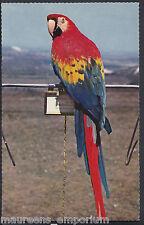 Animals Postcard - Birds of Paradise - Macaw Parrot   RT561