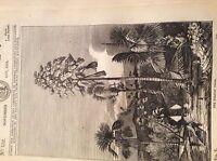 74-8 ephemera 1834 original picture the talapat palm