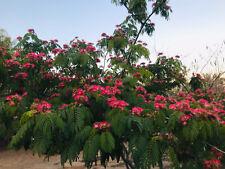 25 + Silk Tree Mimosa Albizia Organic 25 Seeds (Free Us Shipping)