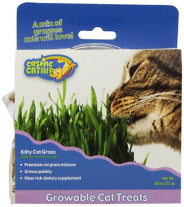OUR PETS - Cosmic Kitty Cat Grass Kit - 0.88 oz. (25 g)