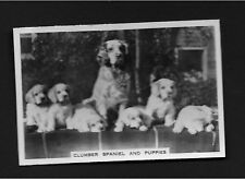 Clumber Spaniel Puppies from series Dogs by Senior Service Cigarettes card #8