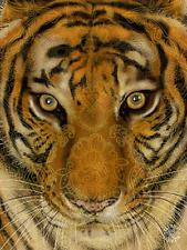 TIGER FACE IMPRINT - 3D PICTURE 300mm X 400mm