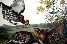 No 38 Audubon Print B. Havell Pinnated Grouse Plate CLXXXVI Birds of America