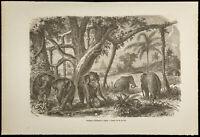 Grabado De 1860 - Rebaño Elefante Para Ceylon - Sri Lanka & India