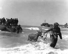 1943 Ww 2 Photo-Invasion of Sicily with Lsd's-Mules Ashore at Licata