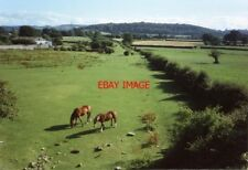 PHOTO  1993 SOMERSET WINSCOMBE SOUTH FROM DROVEWAY BRIDGE THE HORSES GRAZE BY TH