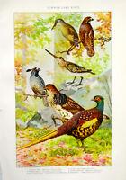 Julius Bien 1902 Chromolithograph (LVI) Common Game Birds