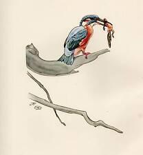 1937 BIRD PRINT ~ KINGFISHER