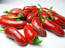 Liveseeds-Pimiento Chile Chile jalapeños Rojo Chile 15 semillas más finos