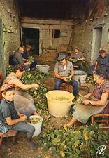 Carte Agriculture Tri des haricots secs Flageolets dans une ferme