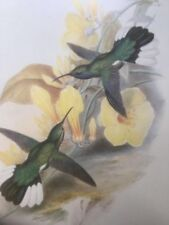 Lithograph Paper Birds Art Prints