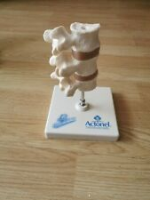 Human anatomical spine bone pine model spinal with stand