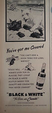 1958 Black & White Scotch Whiskey Scottish Terriers Scotties Buried in Sand Ad
