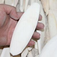 8cm Cuttle Fish Cuttlefish Bone For Pet Budgie Birds Reptiles Tortoise Food Top