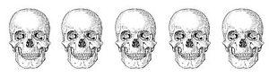 Unmounted Rubber Stamp - Skull Border - 7064