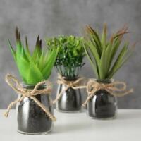 3er SET Kunstpflanze Künstliche Pflanze Sukkulente Glas Dekopflanze Tischdeko