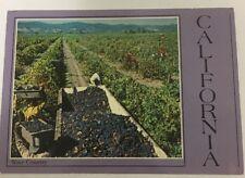 Vintage California Wine County-Harvesting Pinot Noir Grapes-Postcard