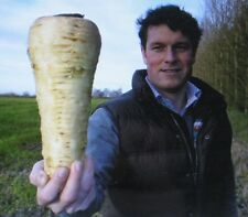 RARE*GIANT*BUTTERSCOTCH PARSNIP*MEDICINAL*50 SEEDS*SWEETER THAN CARROTS