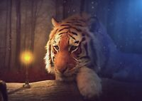 A1 Tiger Wildlife Animal Wall Decor Poster Art Print 60x90cm 180gsm Gift #14072
