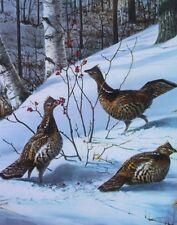 Ruffed Grouse by Owen Gromme