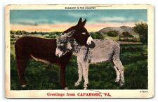Postcard Greetings from Capahosic Virginia Va Vintage Vtg Donkey Farm Animal A30