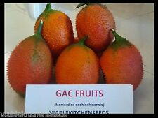 (10) GAC Seeds, Momordica cochinchinensis, gak fruit Herbs gourd plant seed.