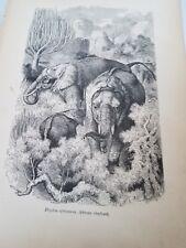 John Kinsley. 1884 African Elephant. Antique Book Print, Africa. Old Paper.