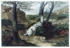 WEST HIGHLAND WHITE WESTIE DOG FINE ART ENGRAVING George Armfield Rabbit Fancier