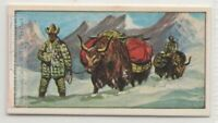 Yak In Tibet Himalayan Asian  Vintage Trade Ad Card