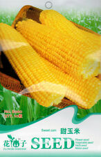 1 Pack 10 Sweet Corn Seeds Maize Zea Mays Organic B060