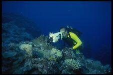 156053 Underwater Video Being Taken Of Cuttlefish A4 Photo Print