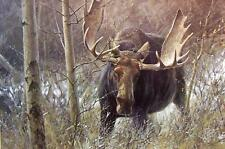 """MOOSE (BULL) Charging on ONE 16 inch Fabric Panel to Sew. Picture is 8""""x10""""."""