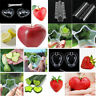 Fruit Shaping Forming Mold Heart Star Vegetable Growth Tool Plastic With Screws