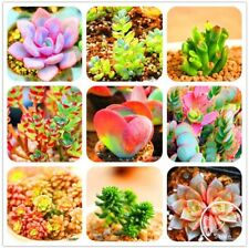300Pcs/Bag Bonsai Seeds Mix Lithops Rare Succulent Flower Pseudotruncatella