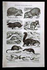 1894.Stampa Xilografica Originale:MANGIATORI DI INSETTI - INSEKTEN Brockhaus