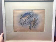 ORIGINAL Signed Handcored REX BRASHER-BIRD PRINT -NO 767b- San Pedro Bluebird