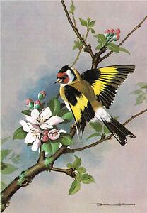 Goldfinch Vintage Bird Picture Old Print Basil Ede 1980 BEB#29