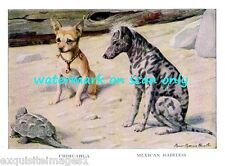 1919~Chihuahua~Mexican Hairless Dog~Tortoise~New Large Note Cards