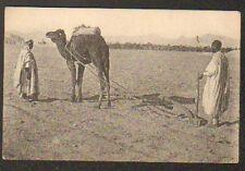 (ALGERIE) AGRICULTEUR INDIGENE avec CHARRUE attelée au CHAMEAU en 1907
